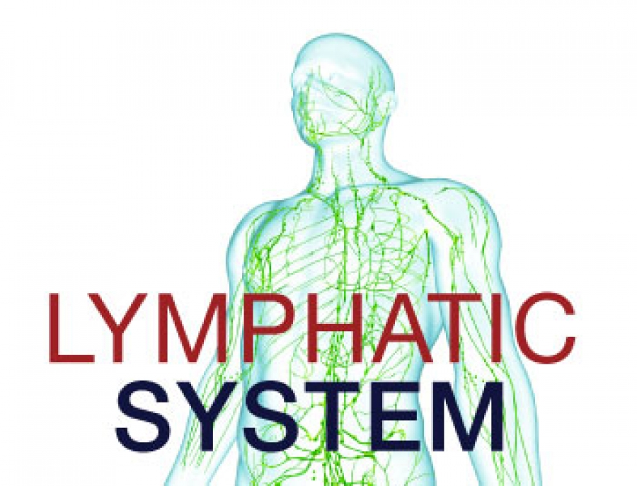 The Importance Of The Lymphatic System Dr Rath Research Institute